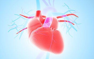 """Aruncarea """"gunoiului celular"""" ajută la recuperarea inimii după infarctul miocardic"""